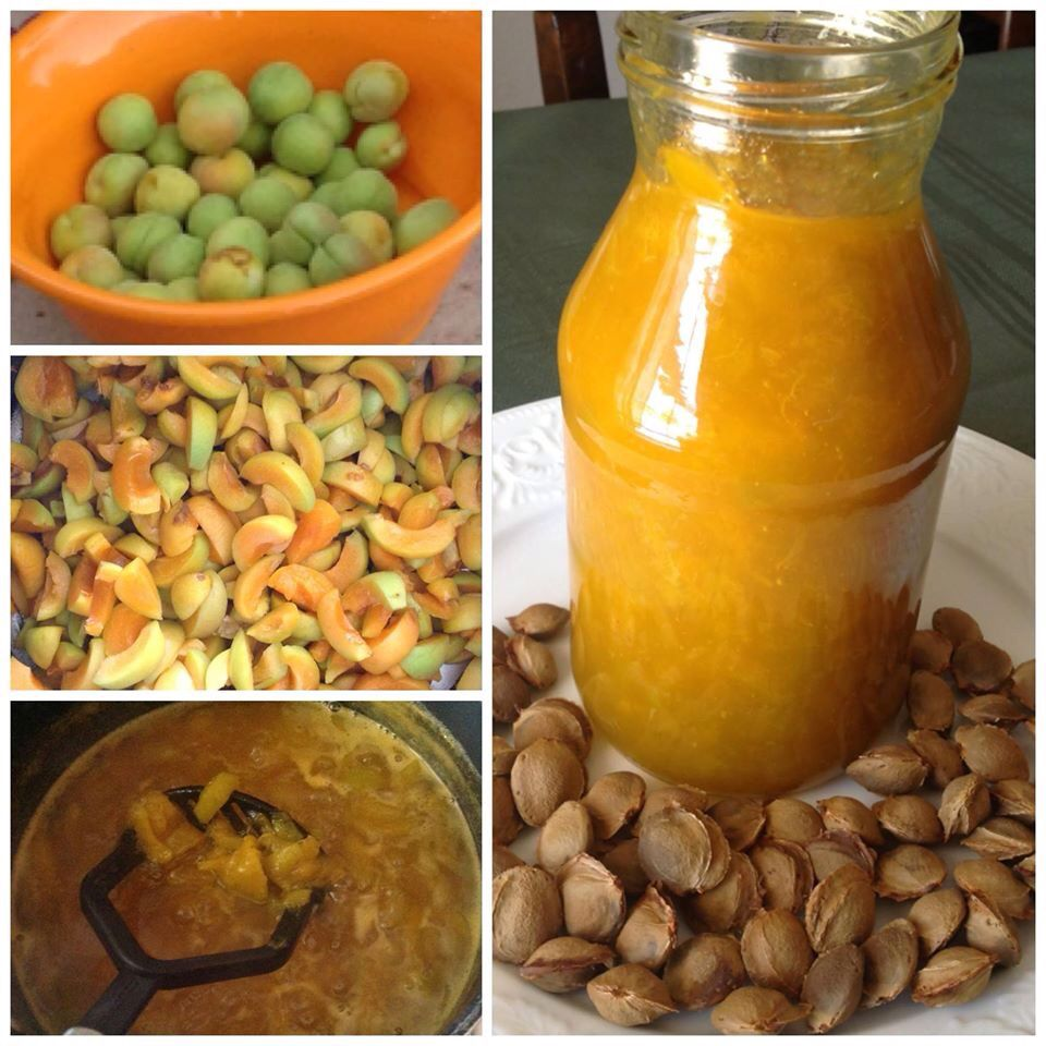 Mermelada de chabacano / Apricot jam. Cosechados del arbol de mi casa :) Cortarlos en pedacitos y retirar los huesitos. Ponerlos a hervir en una olla con agua y azucar, sin parar de mover y triturar, hasta q suelten toda su pulpa. El agua se va calculando como va consumiendose. El azucar es al gusto. Por 5 tazas de pedacitos de chacabano, utilize una taza de azucar. Sabes que estan listos cuando la textura es de caramelo y espesa. Dejar enfriar y refrigerar.