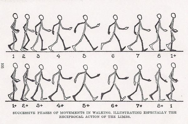 Basic Animation Workshop A Human Figure Walking Walking Animation Animation Sketches Animated Drawings
