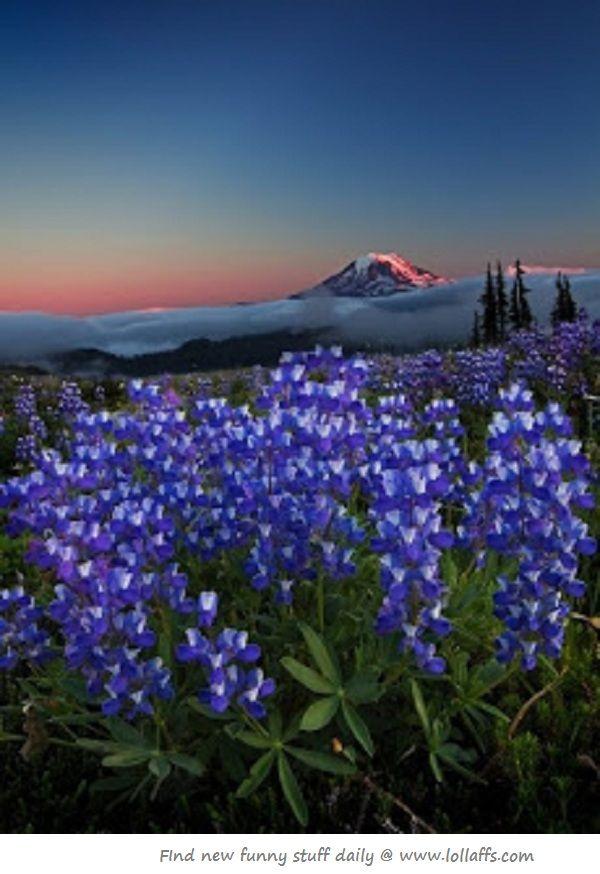 Pacific Coast Trail - Washington http://www.stopsleepgo.com/vacation-rentals/washington/united-states