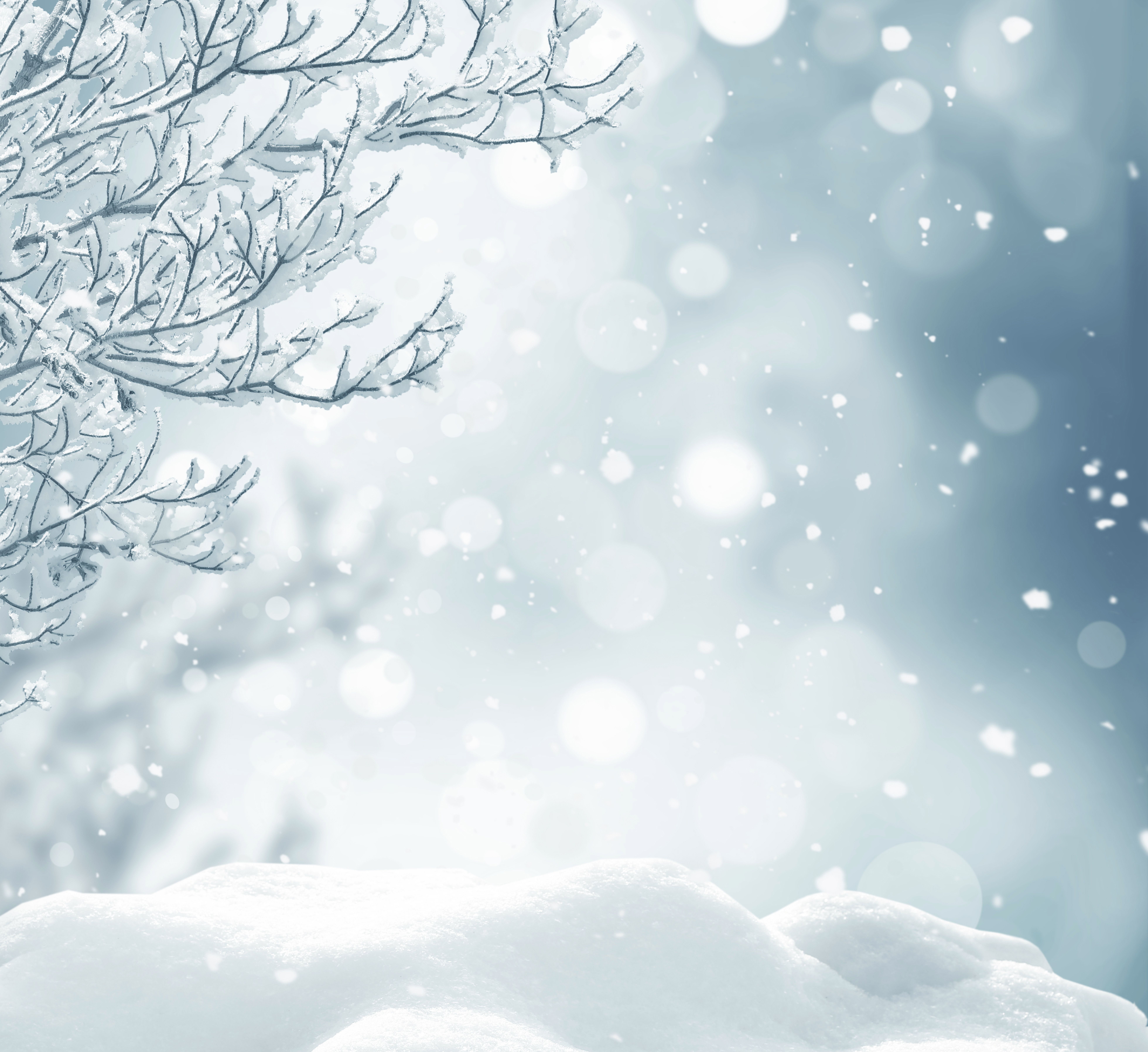 Snowy Background With Branches Winter Background Night Sky Photography Background