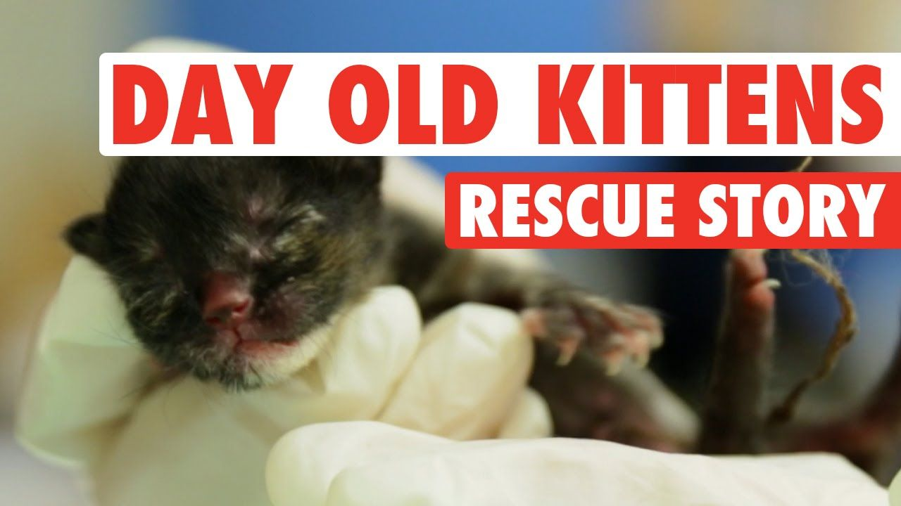 Three Abandoned One Day Old Kittens A Rescue Story Rescue Stories Kitten Rescue Stories Kittens