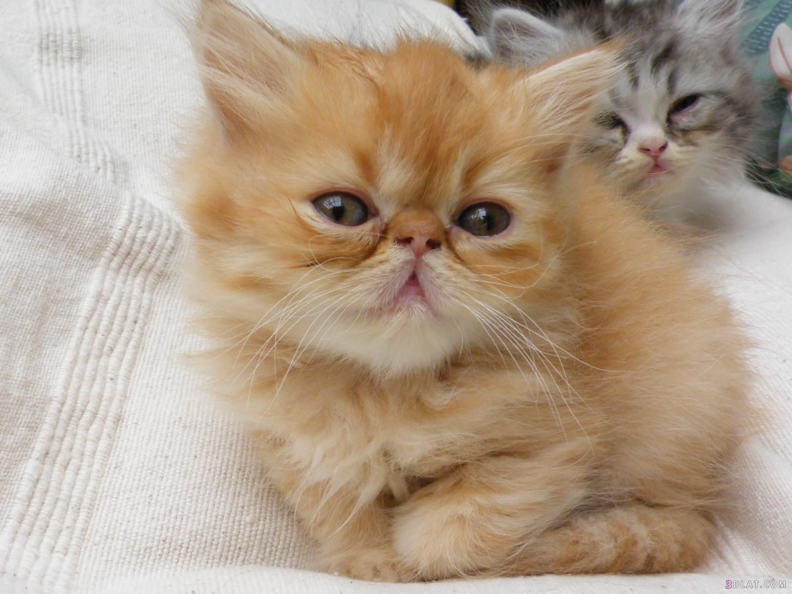 أروع صور قطط مضحكة مشاكسة حزينة حنونة Cute Animals Cats Animals