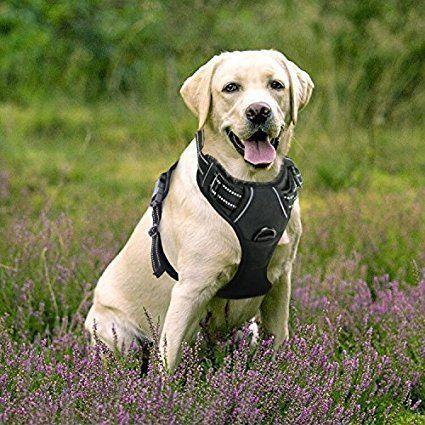 Dog Harness Black Friday