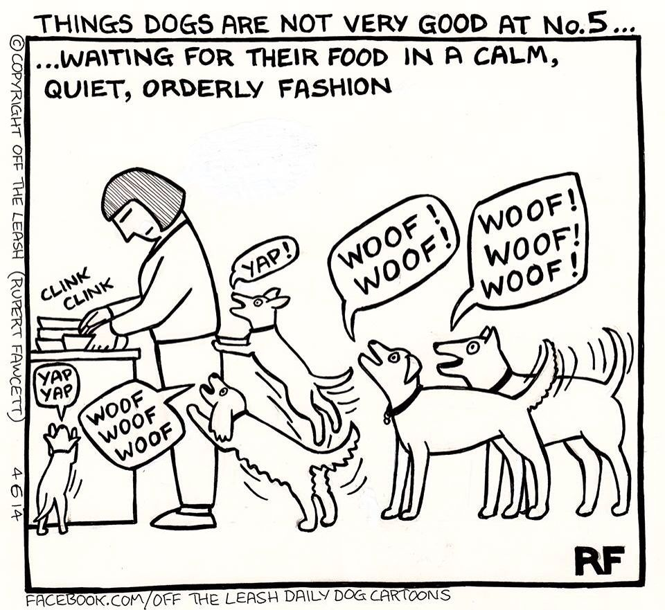 Things That Dogs Are Not Very Good At Dog Quotes Funny Puppy Snuggles Dogs