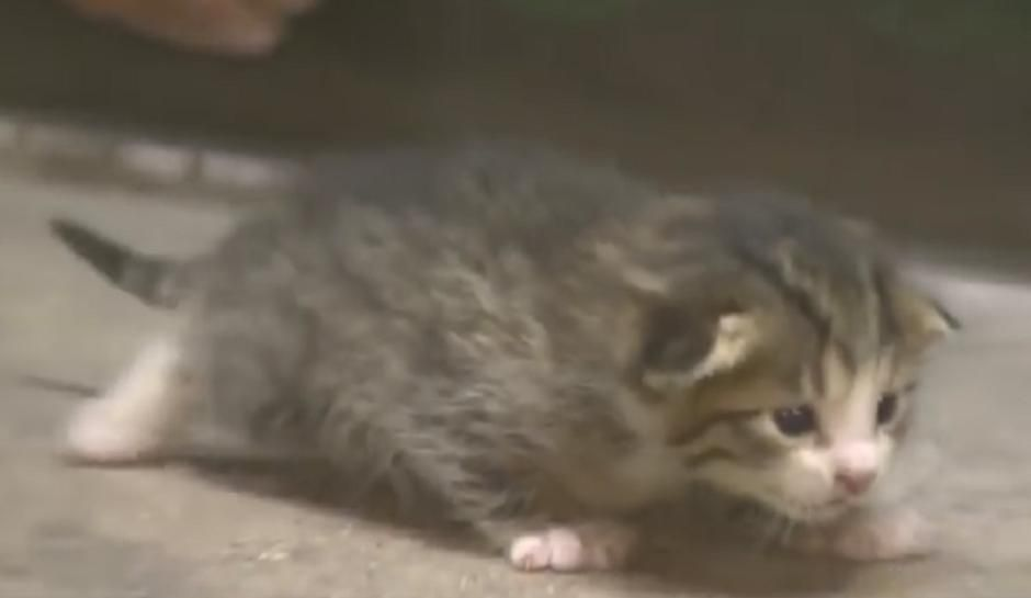 Kitten Conveyor Belt Rescue: Kitty Takes A Scary Ride At Recycling Plant [Video] & Just Lost One of Its nine lives