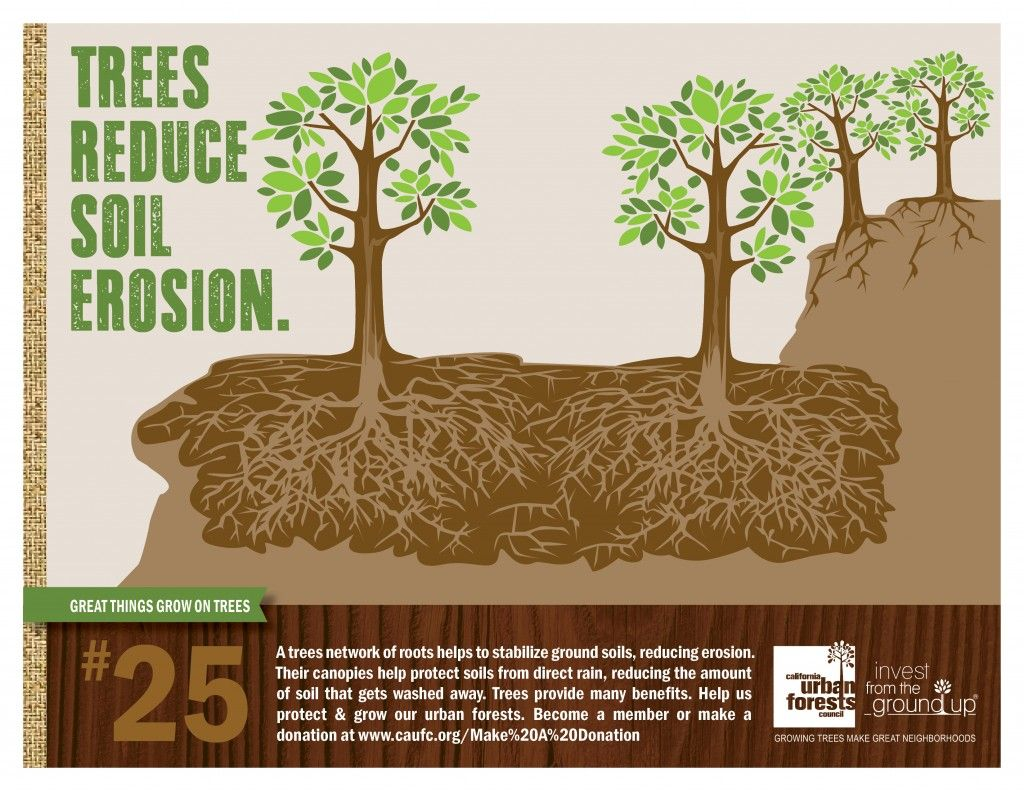 a trees network of roots helps to stabilize ground soils, reducing