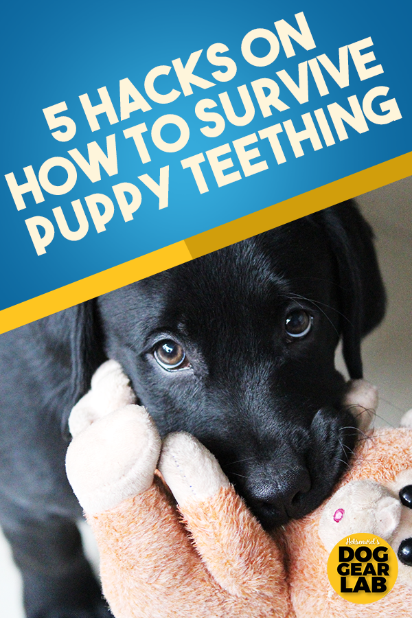 5 Hacks To Survive Puppy Teething Puppy Teething Puppy Teething Remedies Dog Training