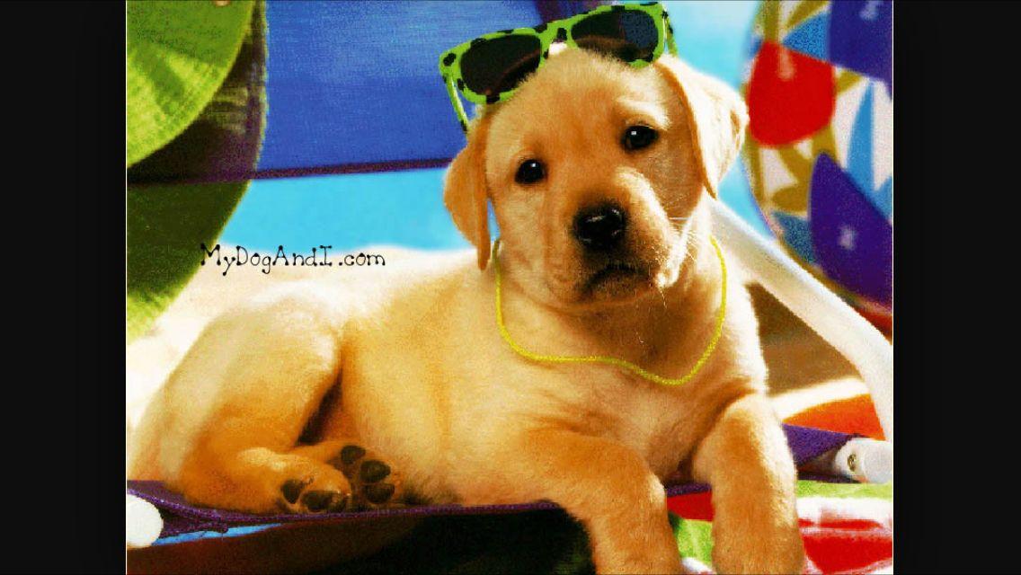 Summer Cute Puppy Wallpaper Cute Puppies Puppy Wallpaper