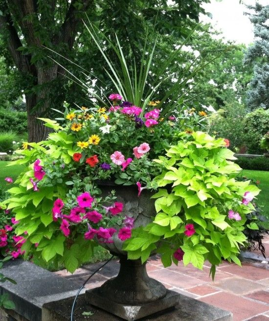 building a dream house: front porch container gardens | urn ... - Patio Flower Ideas