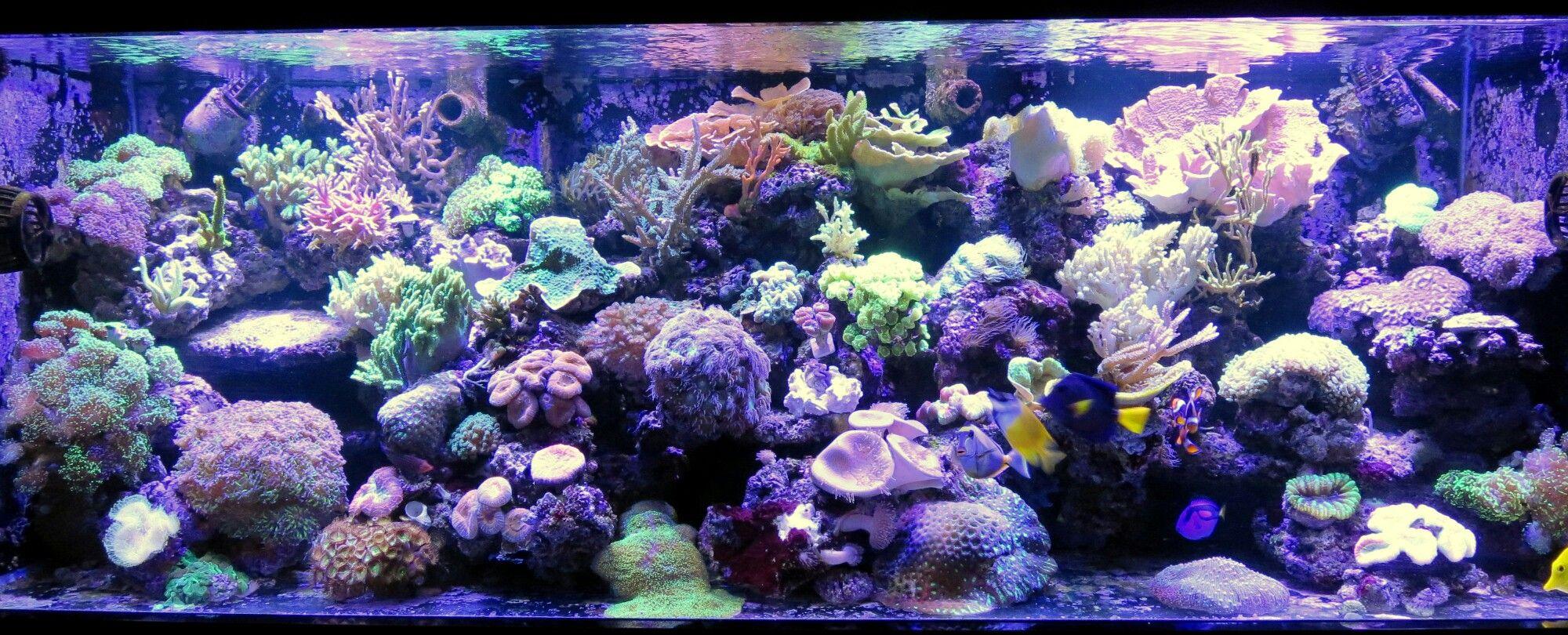 ec11e877e052 400 gallon bio-active coral and anemone reef tank with blue tang ...