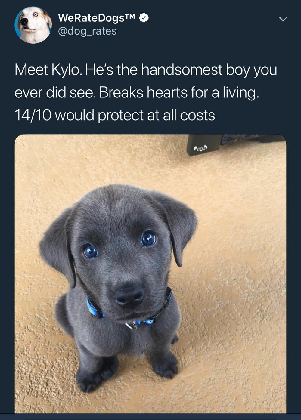 Pin On Animal Tweets