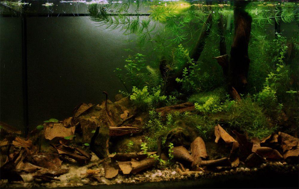 ボード「akvárium, vivárium」のピン