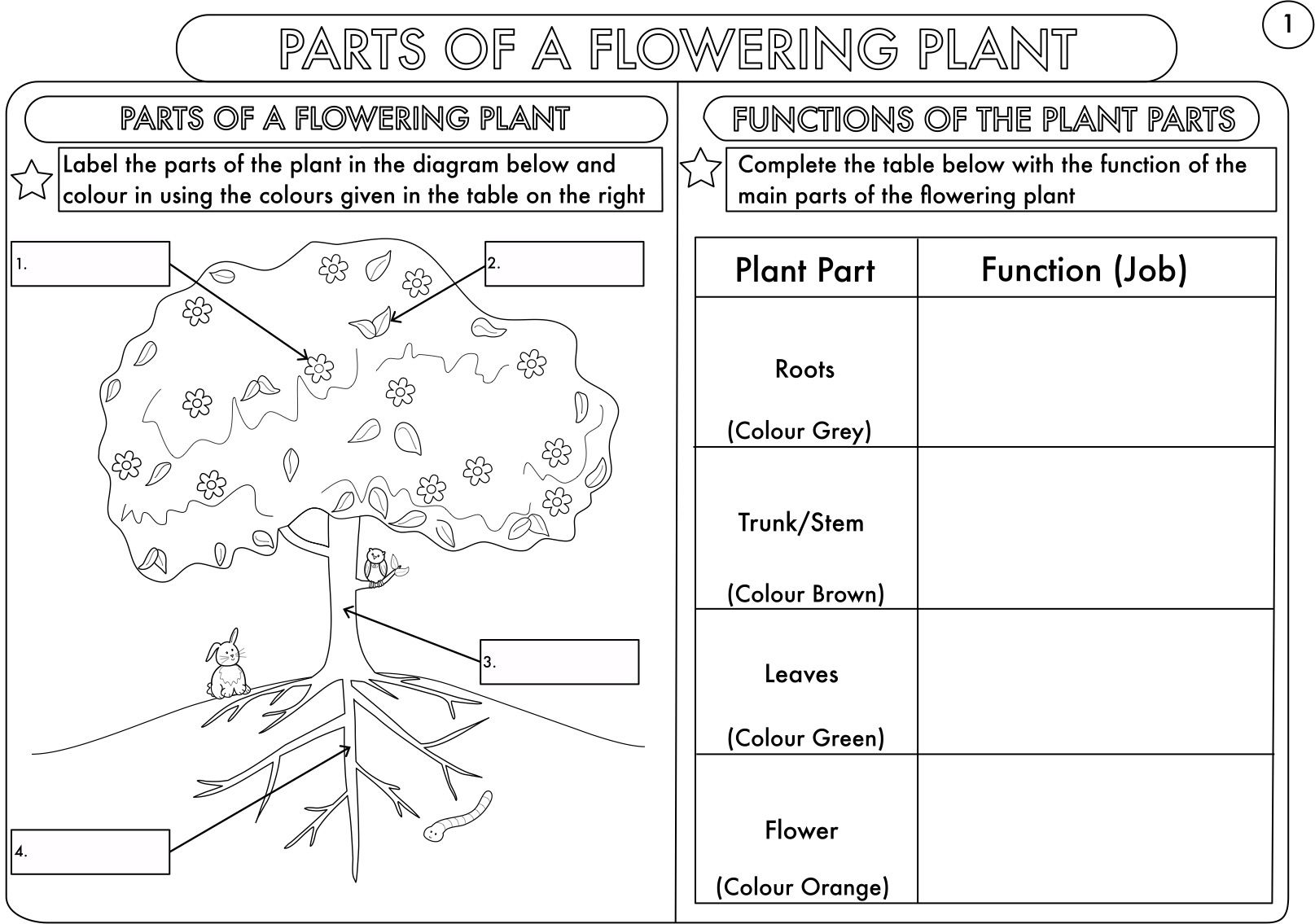Parts Ofwer Worksheet Kindergarten Free Label Plant For Of