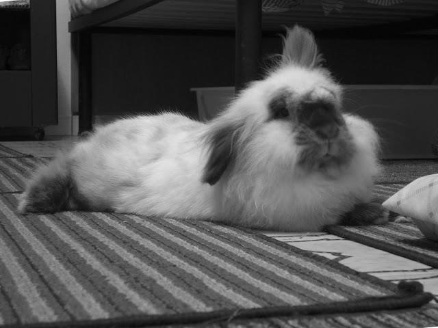 Coniglietto...<3