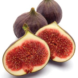 Brown Turkey Fig ... http://www.monrovia.com/plant-catalog/plants/1256/brown-turkey-fig.php