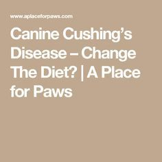Canine Cushing's Disease – Change The Diet? | A Place for Paws