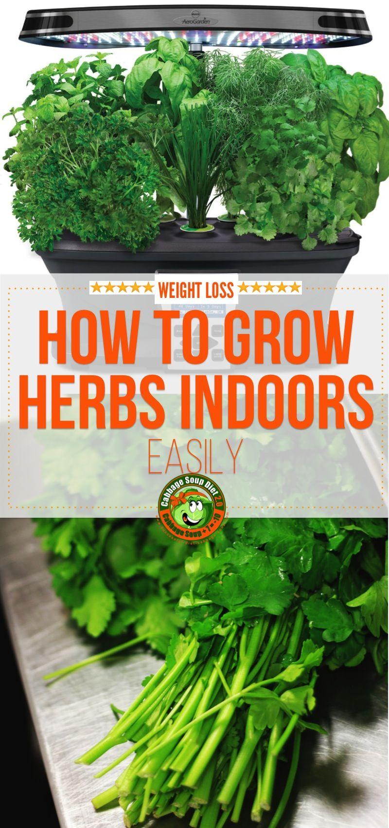Aerogarden Review How To Grow Herbs Indoors Easily 400 x 300