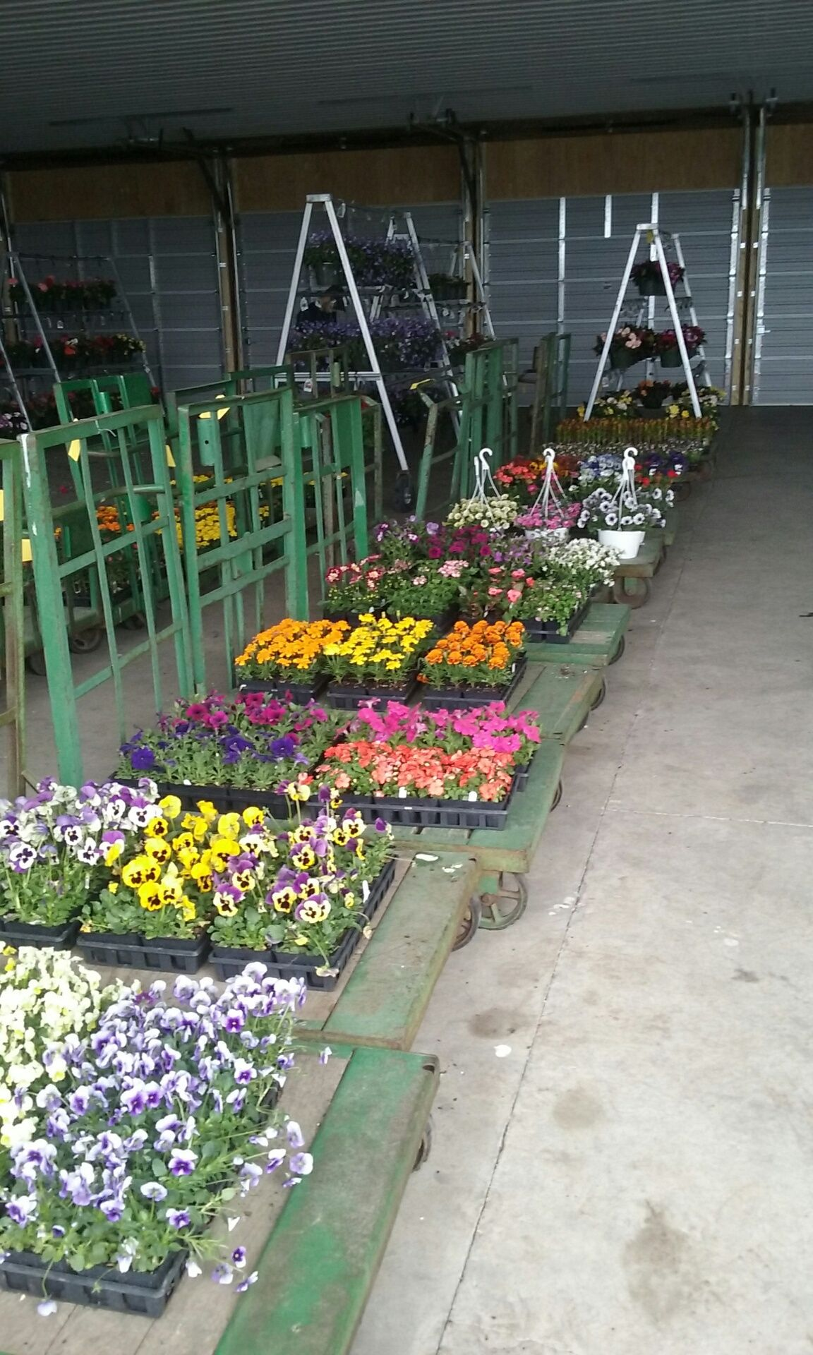 Spring Flowers For Sale At The Lebanon Produce Auction Myerstown