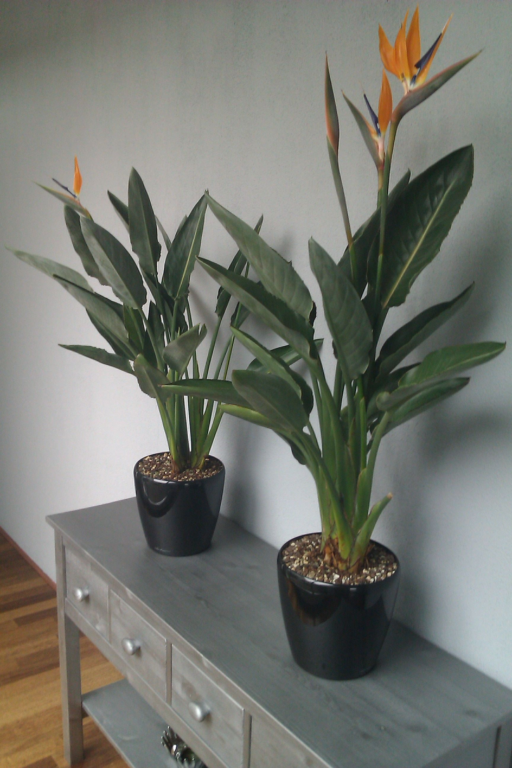 Small size flowering houseplants. Tropical ...