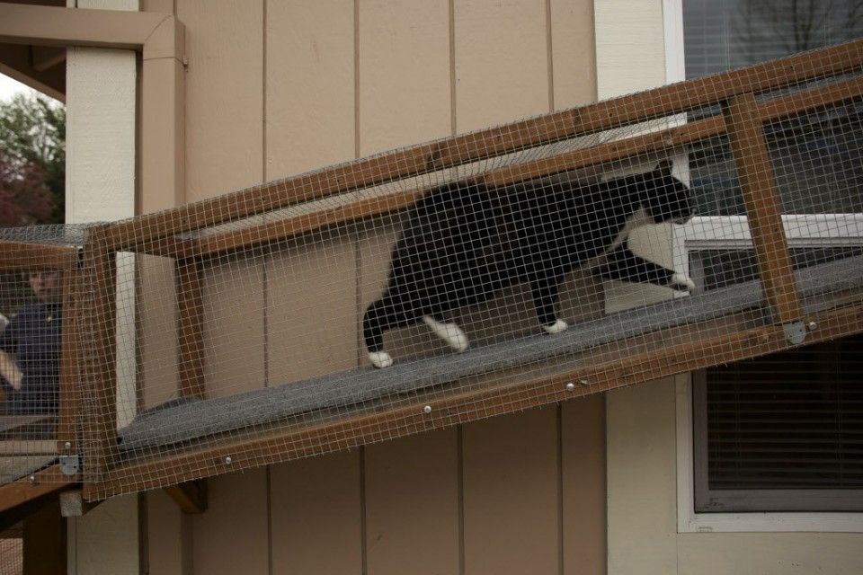 The cat's meow Check out cat patio styles on the Catio