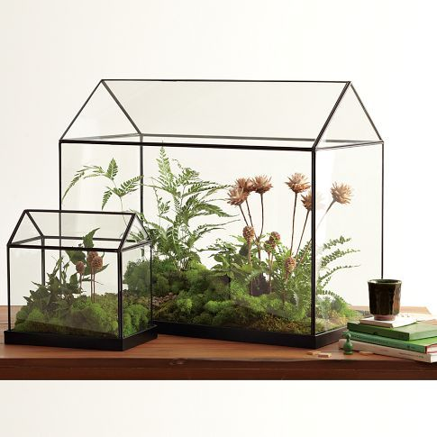 Oh I'd love this Glass Greenhouse from West Elm $169.00  But I know that my kids would some how destroy it...