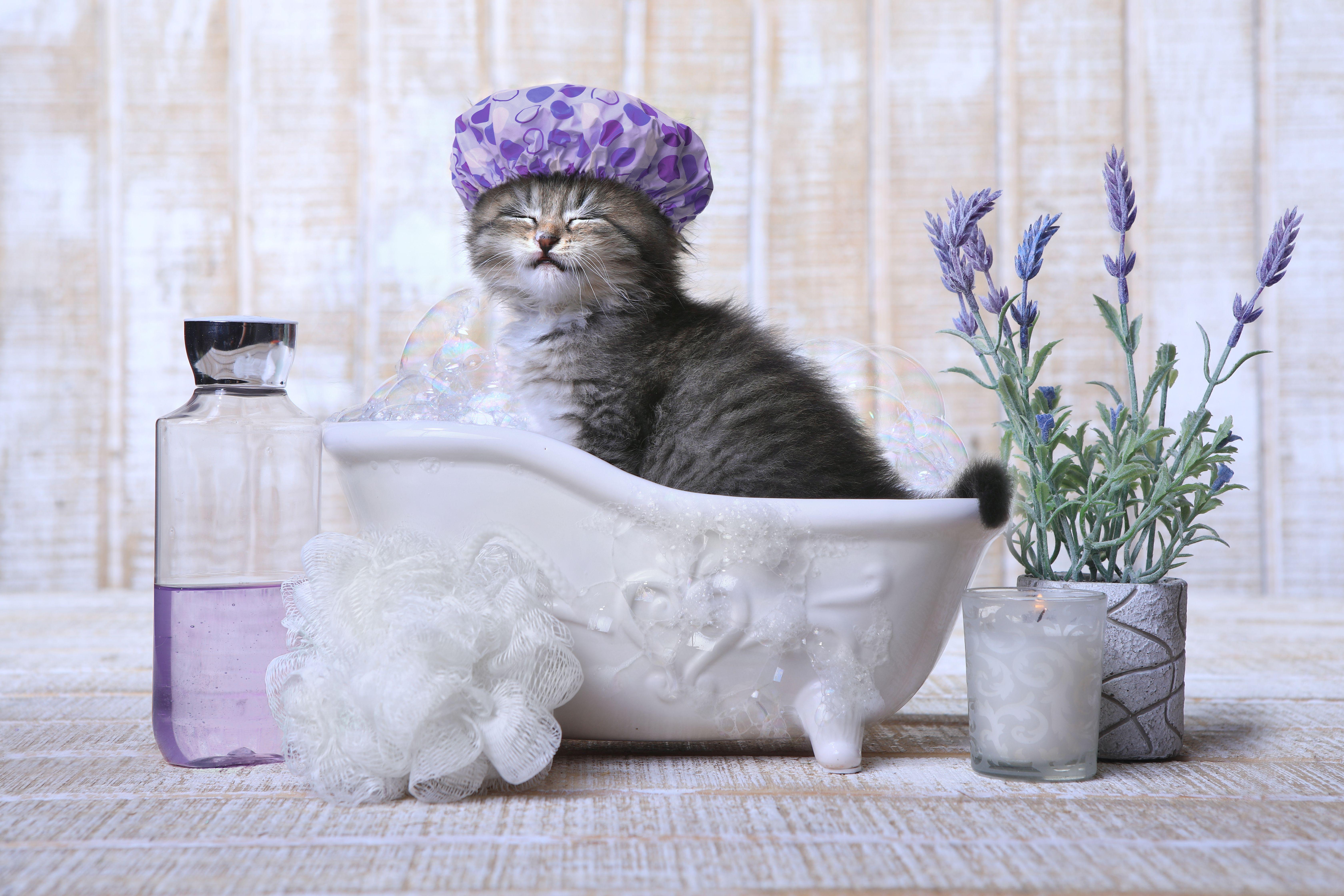 How To Bathe A Kitten Cuteness Adorable Kitten Kittens Cutest Cats