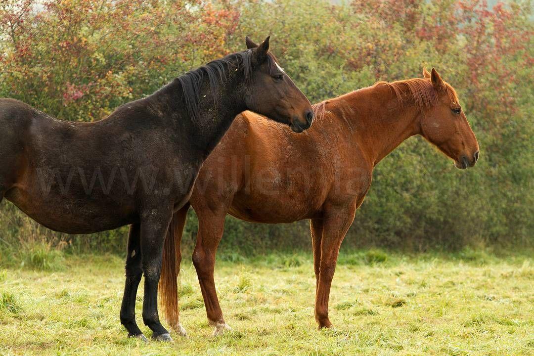 Twee paarden in The New Forest Engeland. Mijn favoriete gebied in het zuiden van Engeland. #photography #travelphotography #traveller #canon #canonnederland #canon_photos #fotocursus #fotoreis #travelblog #reizen #reisjournalist #travelwriter#fotoworkshop #willemlaros.nl #reisfotografie #landschapsfotografie #follow #instalaros #fb