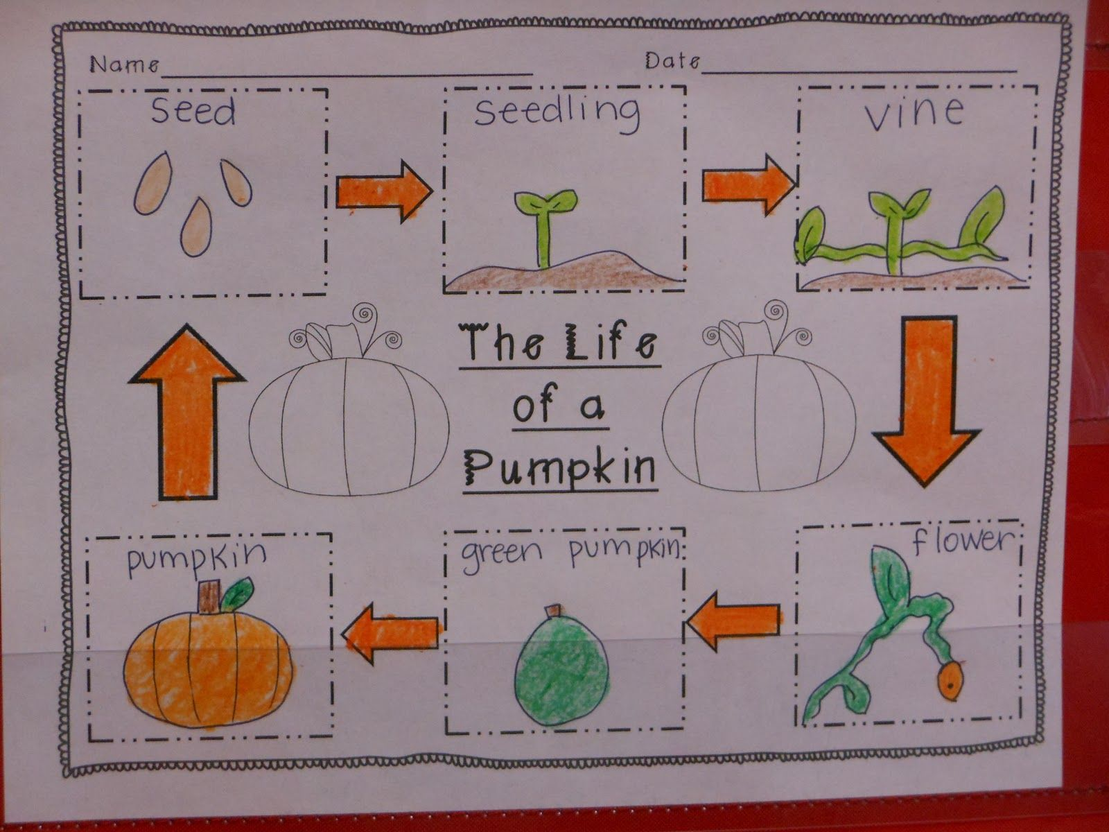 Pumpkin Life Cycle Diagram Of Worksheet And Wiring A For The Love First Grade Great Investigation Rh In Pinterest Com