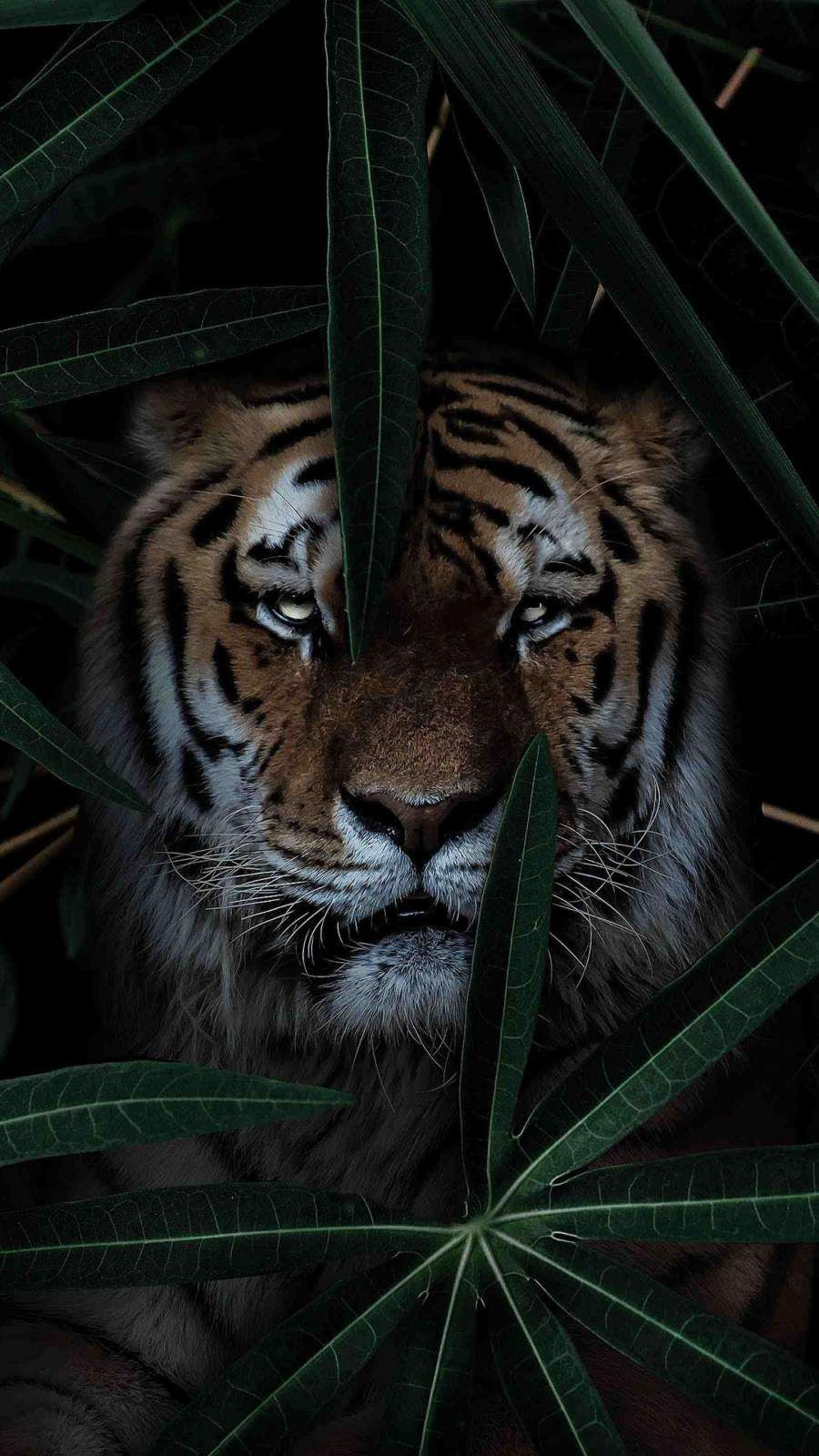 Wild Tiger Wallpaper Tiger Wallpaper Iphone Wallpaper Cat Wild Tiger