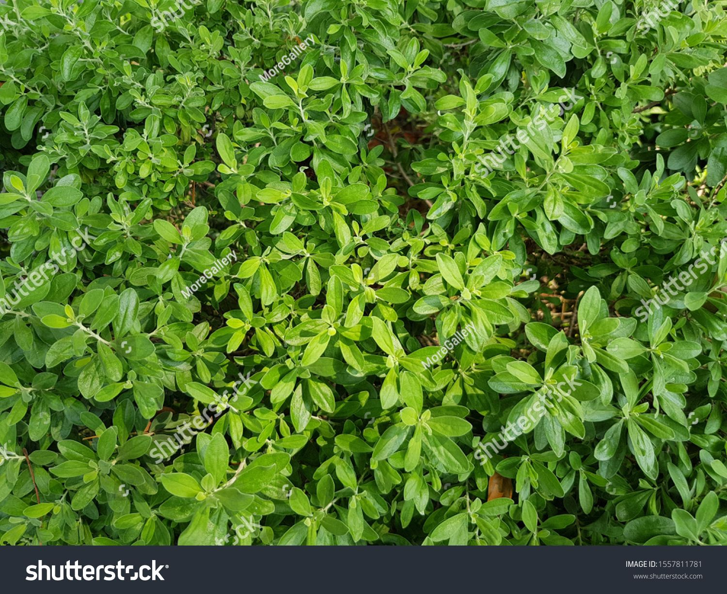 Greenery Natural Plant Background Home Garden Backdrop Fresh Nature Ad Sponsored Plant Background Greenery Na In 2020 With Images Garden Backdrops Plant Background Plants