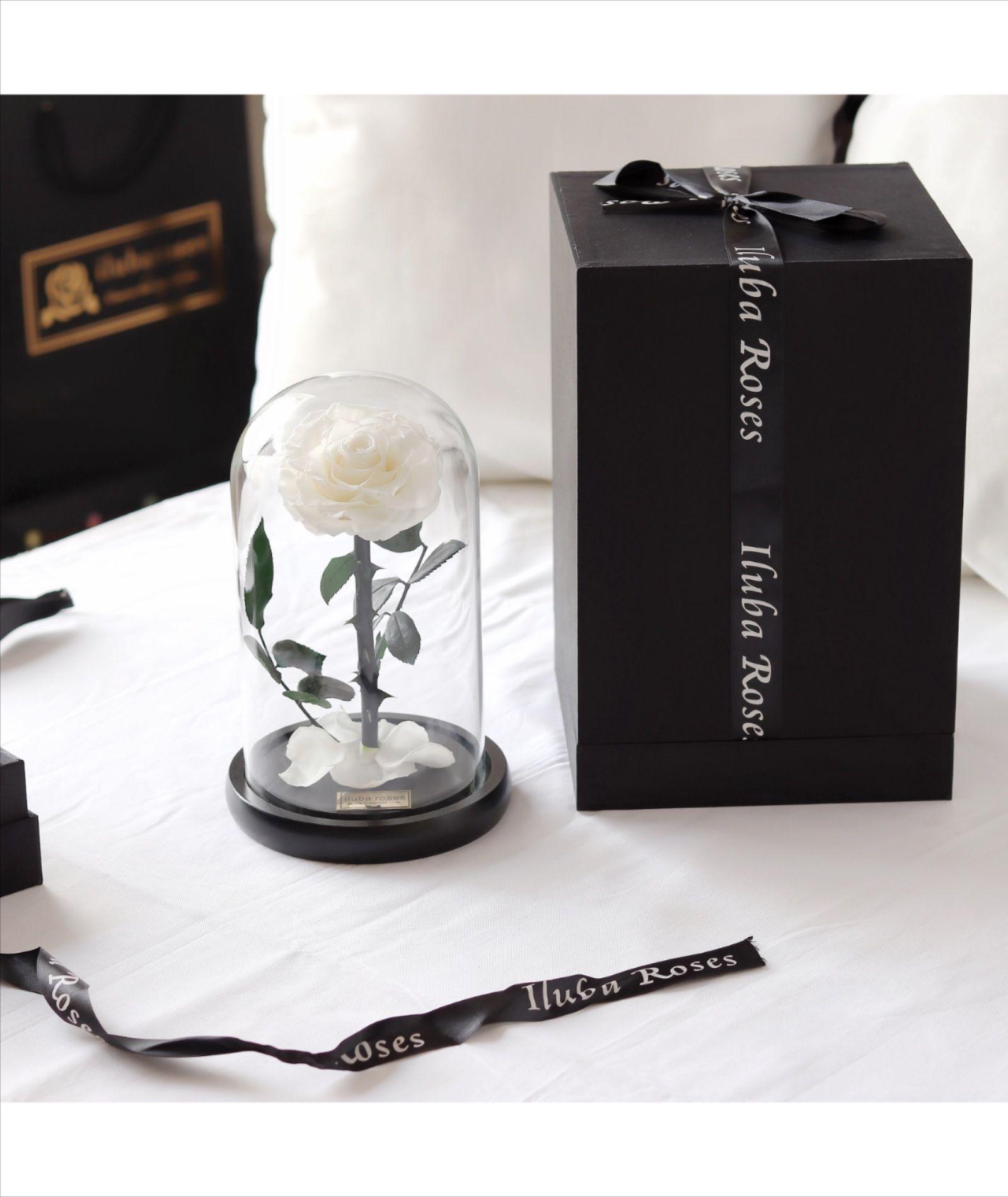 وردة ايلوبا روزز ابيض داخل فازة زجاجية Perfume Bottles Perfume Bottle