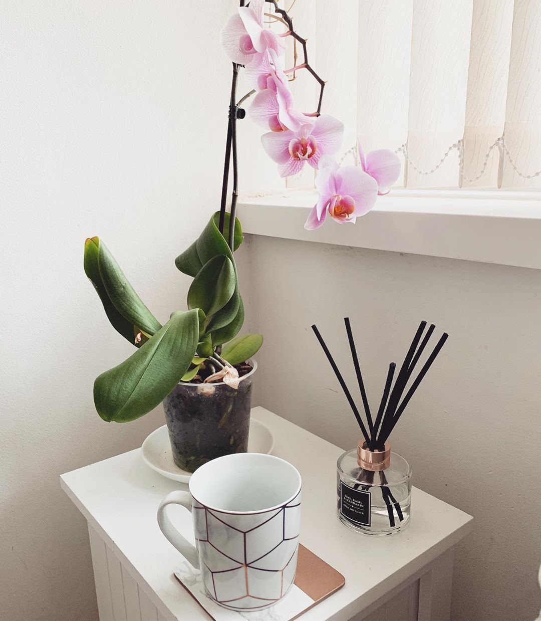 My New Orchid Is Adorable Asda Plants Orchid Flowers Plantpot Bedroom Interior House Home Homedecor Homeinterior Acc Orchidaceae Plants Orchids