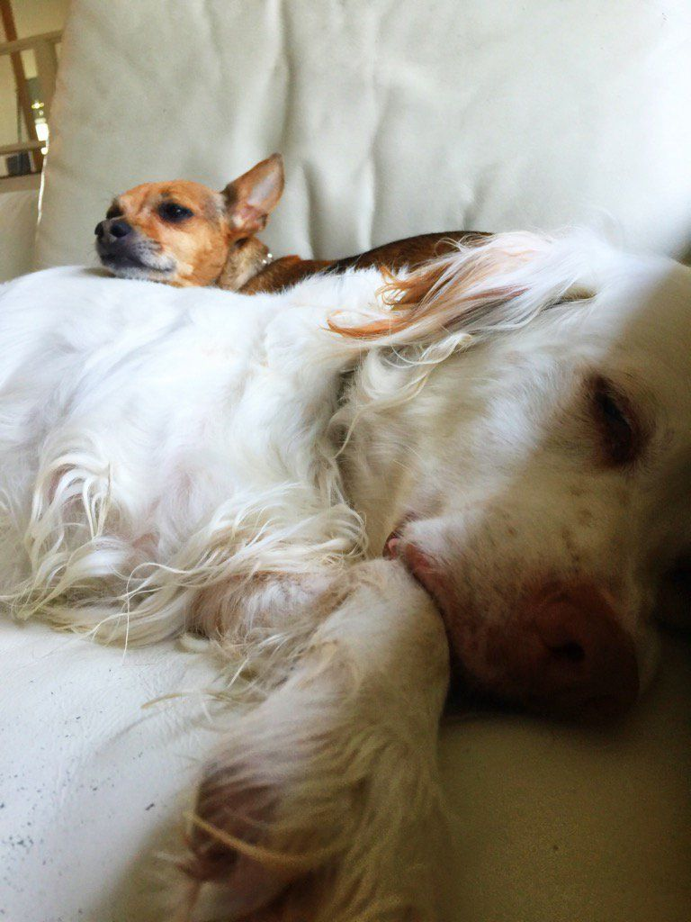 Hi Daddy ~ Mac & Daphne here... snoozing