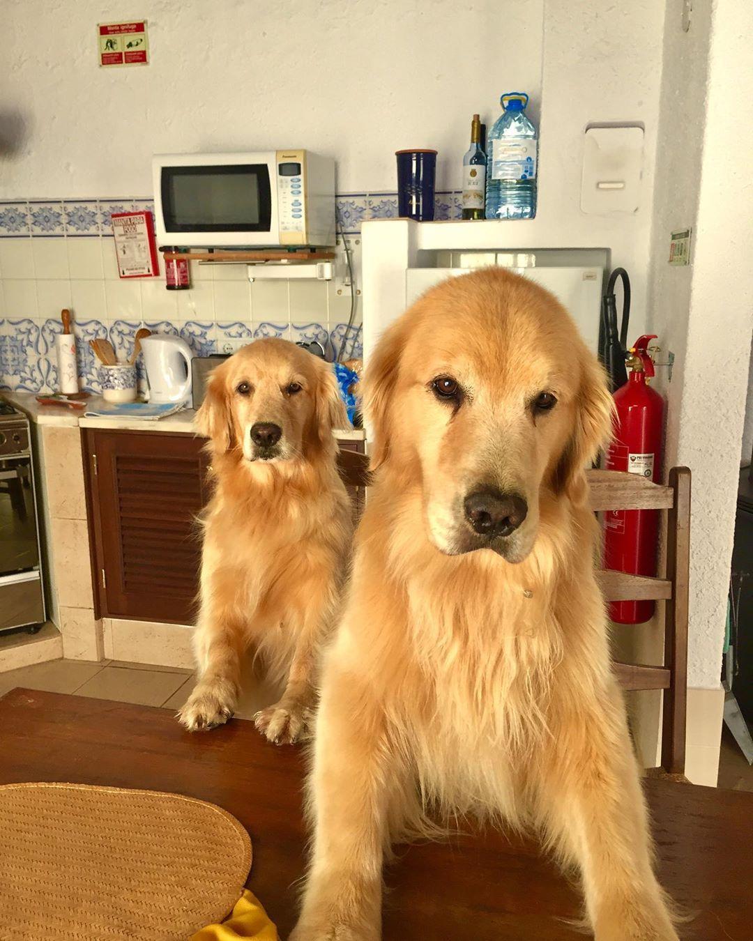 Sebsauvage Net Puppies Dog Lovers Puppy Love