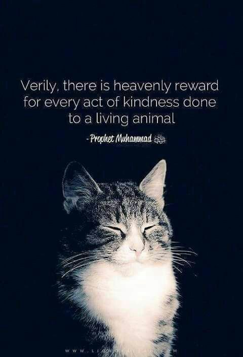 Be kind to all living beings ❤  | Islamic quotes and Images | Cats