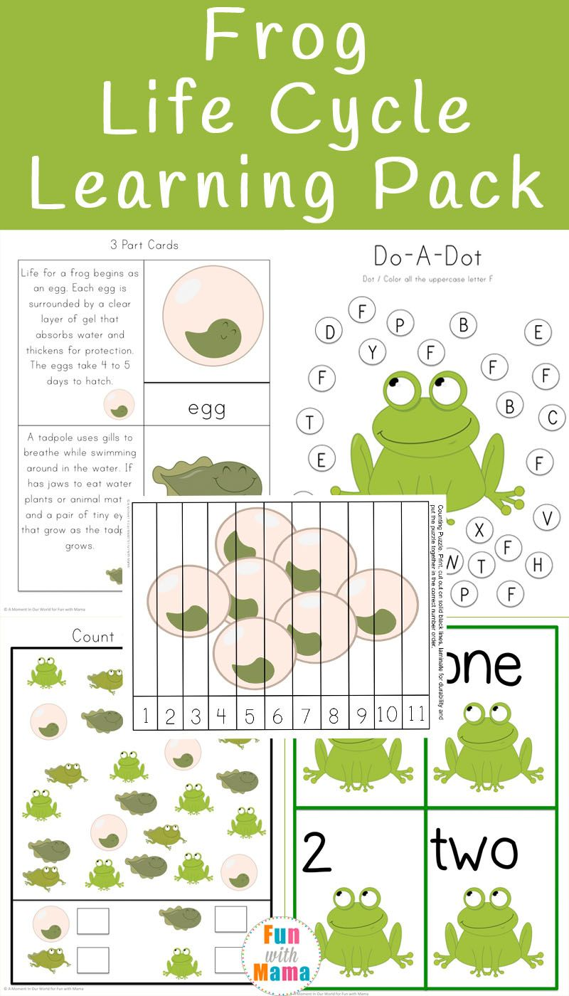 worksheet Life Cycle Of Plants And Animals Worksheets frog life cycle learning pack cycles printable preschool kindergarten with worksheets crafts and activities via