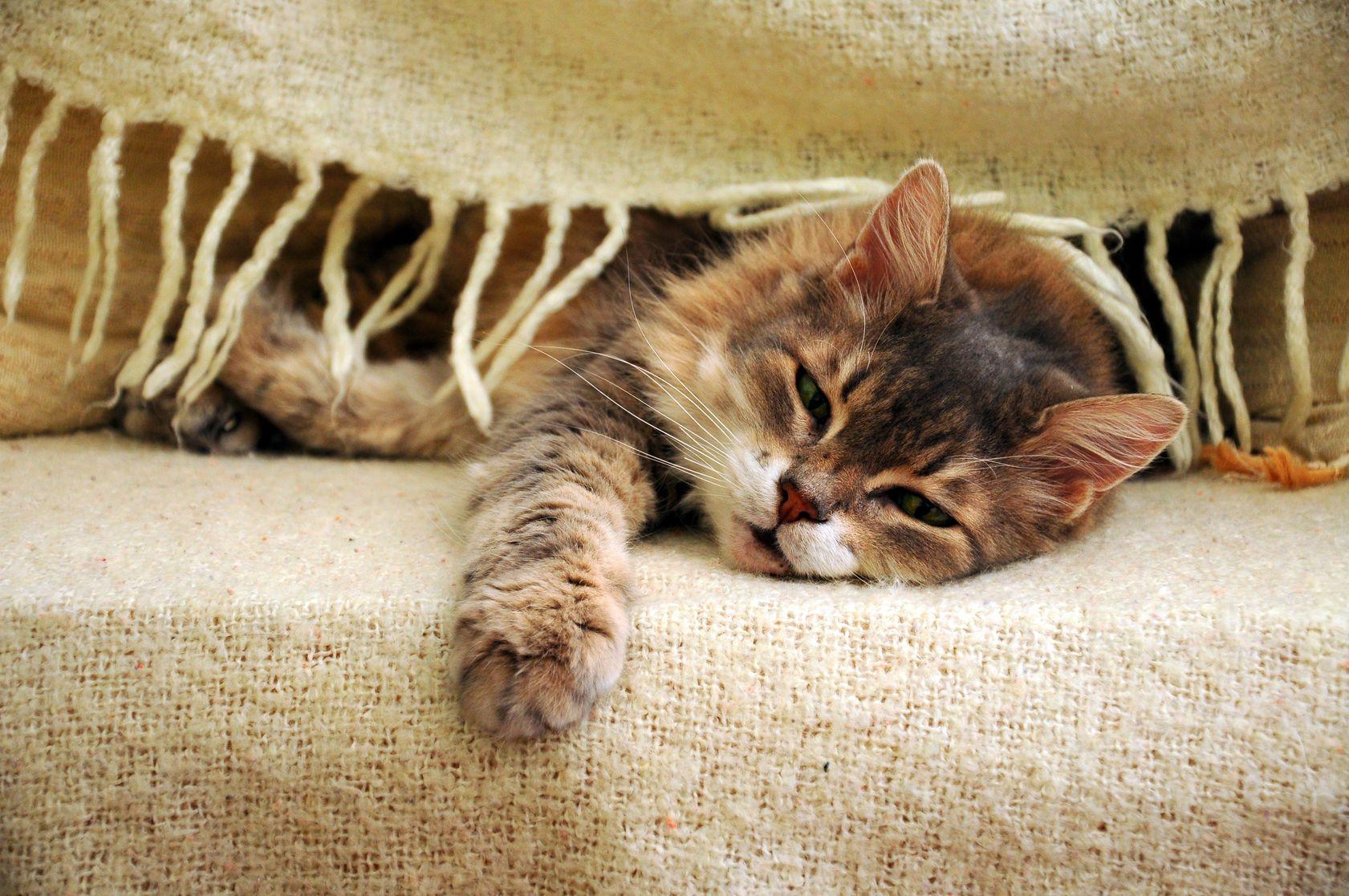 7 Moglichkeiten Ihre Katze In Der Stadt Zu Unterhalten Und Sicher