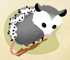 cute possum drawing - Google Search   Possum image ...