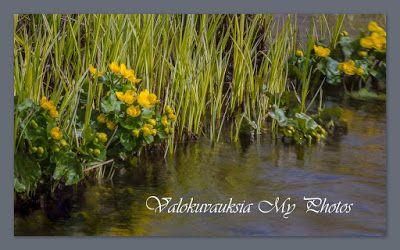 ** Valokuvauksia / My Photos/ Finland