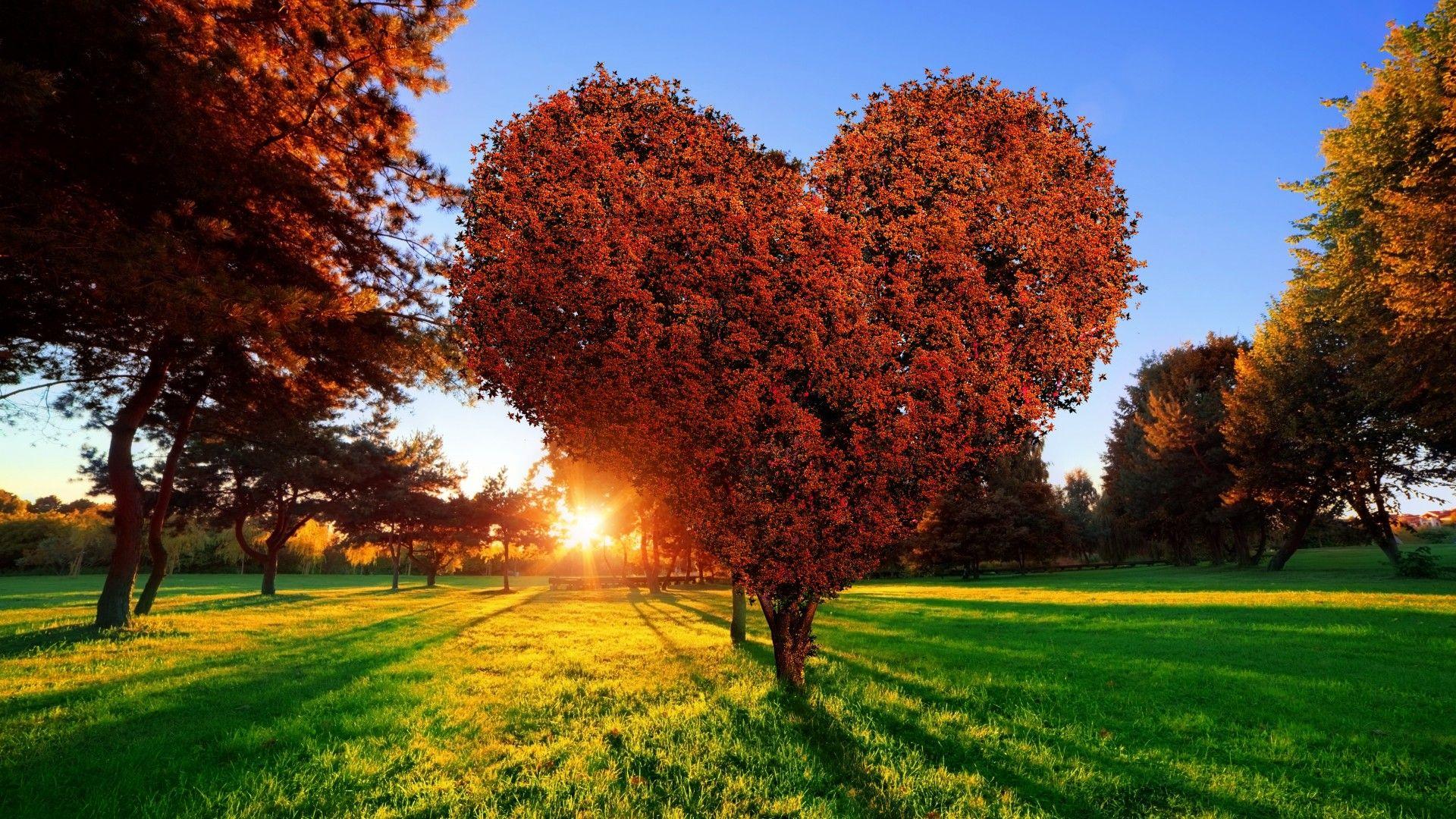árbol En Forma De Corazón Full Hd En Fondos 1080 Nature Heart