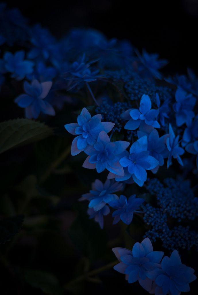 Картинка с голубым цветом и темным