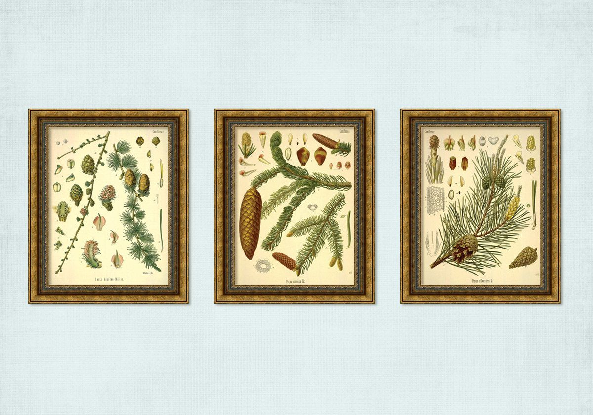 Set of 3 Vintage Coniferous Tree Branch Pine Cone Prints - INSTANT ...