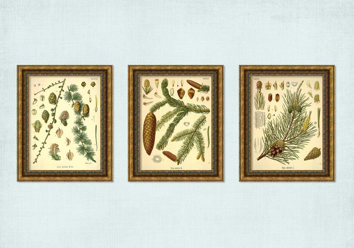 Set of 3 Vintage Coniferous Tree Branch Pine Cone Prints - INSTANT ...