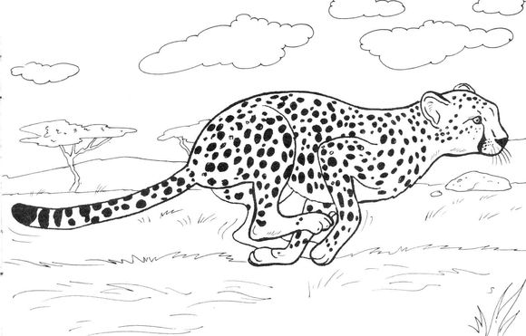 Cheetah Running Coloring Page Animal Coloring Pages Puppy