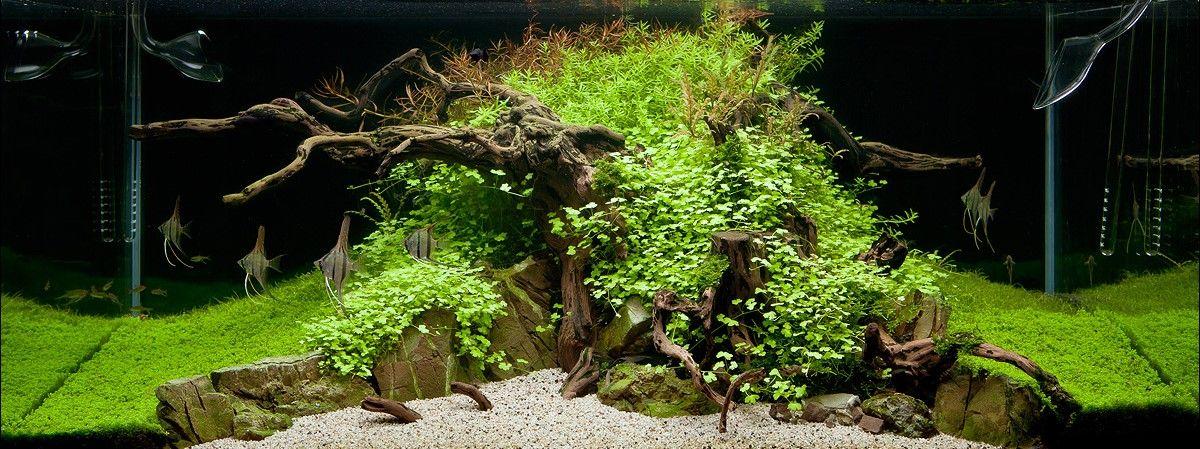The Dead Tree Norbert Sabat Aquarianen Nl Aquarium Weblog En Journals Nature Aquarium Planted Aquarium Aquascape