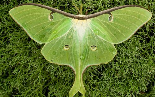 butterfly/moth ... gorgeous coloring
