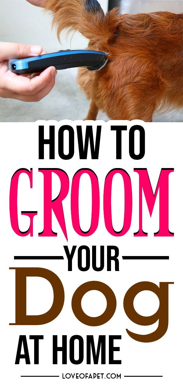 Pin on Dog Grooming Supplies & Tips