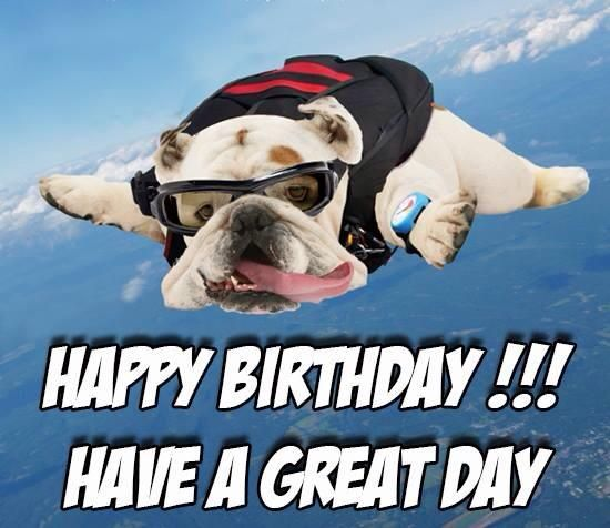 Happy Birthday Quotes Image By Louise Sadnick On English Bulldogs