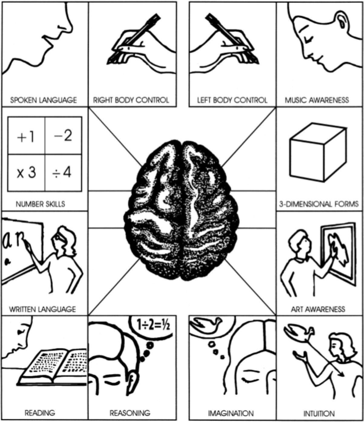 Right And Left Brain