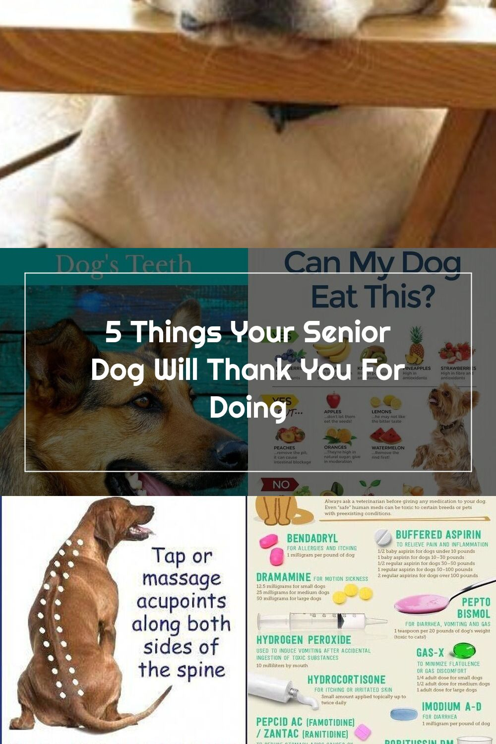 5 Things Your Senior Dog Will Thank You For Doing Senior Dog Care Tips In 2020 Senior Dogs Care Dog Care Tips Senior Dog